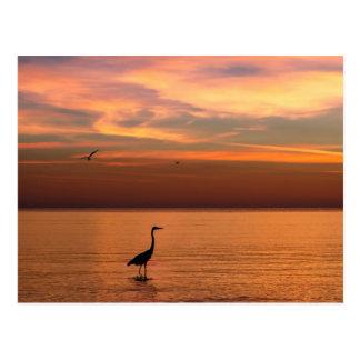 Ocean View at Sunset Postcard