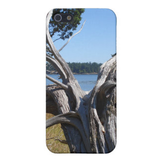 Ocean View by Uncle Junk Cover For iPhone SE/5/5s