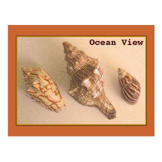 Ocean View Shells Postcard