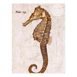 Ocean Vintage Sea Horse Creature Seahorse Postcard