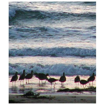ocean water sunset. Ocean Water Beaches Birds