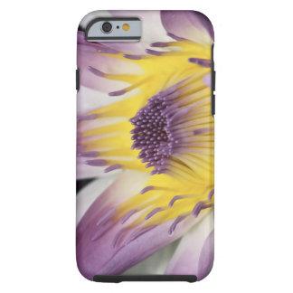 Oceanía, Fiji, Panamá púrpura Pacifica Nymphea Funda Para iPhone 6 Tough