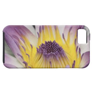 Oceanía, Fiji, Panamá púrpura Pacifica Nymphea iPhone 5 Carcasa