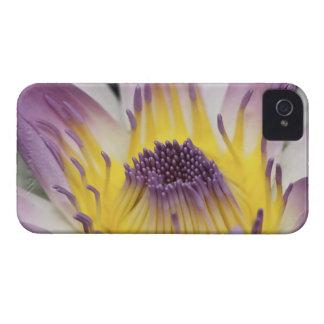 Oceanía, Fiji, Panamá púrpura Pacifica Nymphea iPhone 4 Fundas