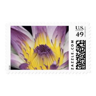 Oceania, Fiji, Purple Panama Pacifica Nymphea Stamp