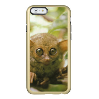 Oceania, Indonesia, Sulawesi. Tarsier tarsius Incipio Feather Shine iPhone 6 Case