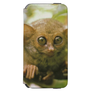Oceania, Indonesia, Sulawesi. Tarsier tarsius iPhone 6/6s Wallet Case