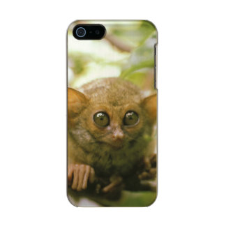 Oceania, Indonesia, Sulawesi. Tarsier tarsius Metallic Phone Case For iPhone SE/5/5s