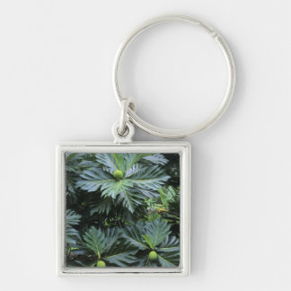 Oceania, South Pacific, French Polynesia, Keychain