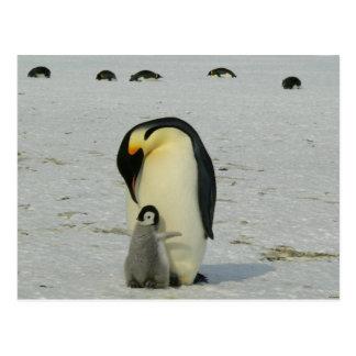 Océano antártico de los pájaros de la playa de la tarjeta postal