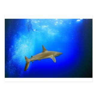 Océano azul bajo el agua profundo del tiburón tarjetas postales