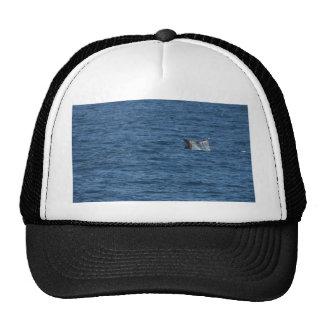Océano de las colas de las ballenas gorro de camionero