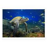 Océano Pacífico bajo el agua tropical de la tortug Postal