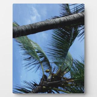 Océano, palmas, y yates placas con foto