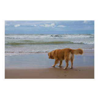 Océano tocante del perro perdiguero del pato de Nu Fotografías
