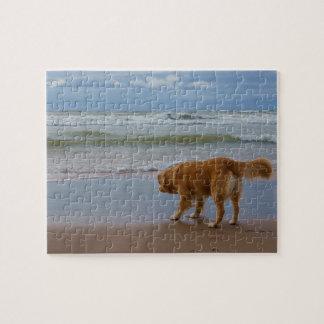 Océano tocante del perro perdiguero del pato de puzzle