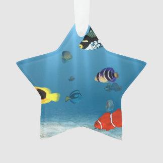 Oceans Of Fish