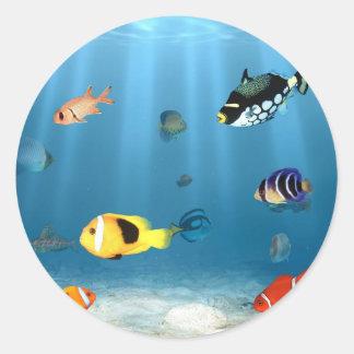 Oceans Of Fish Classic Round Sticker