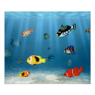 Oceans Of Fish print