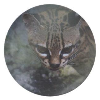 Ocelet en peligro en la placa decorativa del myst plato para fiesta