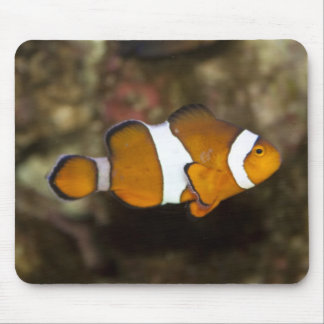 Ocellaris Clownfish Mouse Pad