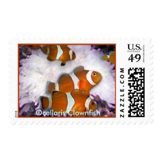 Ocellaris Clownfish Postage Stamp