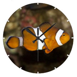 Ocellaris Clownfish Reloj Redondo Grande
