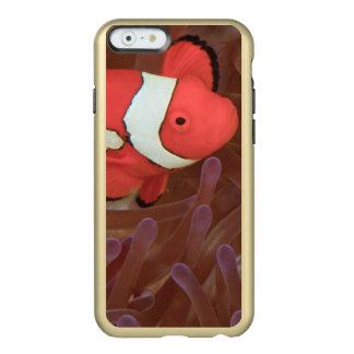 Ocellaris Ocellated del Amphiprion de Anemonefish) Funda Para iPhone 6 Plus Incipio Feather Shine