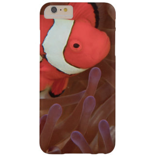 Ocellated Anemonefish Amphiprion ocellaris) Barely There iPhone 6 Plus Case
