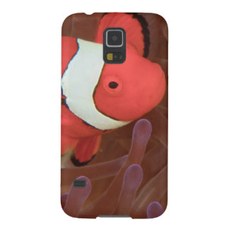 Ocellated Anemonefish Amphiprion ocellaris) Galaxy S5 Cover