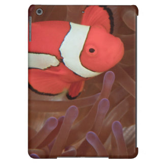 Ocellated Anemonefish Amphiprion ocellaris) Cover For iPad Air