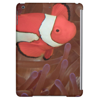 Ocellated Anemonefish Amphiprion ocellaris) iPad Air Cover