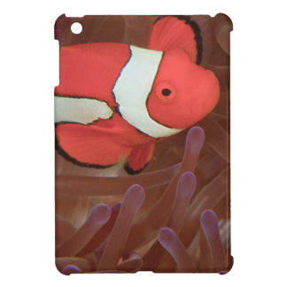 Ocellated Anemonefish Amphiprion ocellaris) iPad Mini Case