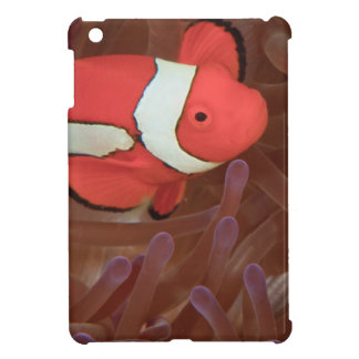 Ocellated Anemonefish Amphiprion ocellaris) iPad Mini Cover
