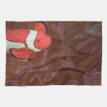 Ocellated Anemonefish Amphiprion ocellaris) Hand Towel