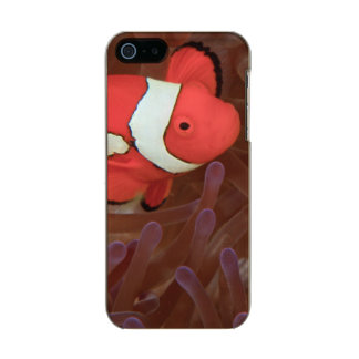 Ocellated Anemonefish Amphiprion ocellaris) Metallic Phone Case For iPhone SE/5/5s