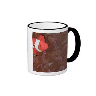 Ocellated Anemonefish Amphiprion ocellaris) Ringer Coffee Mug