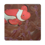 Ocellated Anemonefish Amphiprion ocellaris) Puzzle Coaster