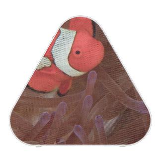 Ocellated Anemonefish Amphiprion ocellaris) Speaker