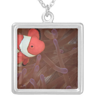Ocellated Anemonefish Amphiprion ocellaris) Square Pendant Necklace