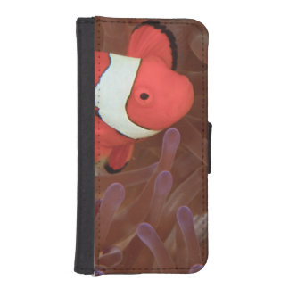 Ocellated Anemonefish Amphiprion ocellaris) Wallet Phone Case For iPhone SE/5/5s