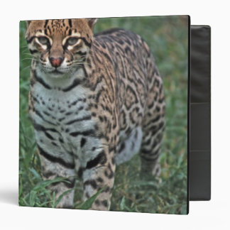 OCELOT Leopardus pardalis) CENTRAL AMERICA 3 Ring Binders