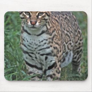 OCELOT Leopardus pardalis) CENTRAL AMERICA Mouse Pad