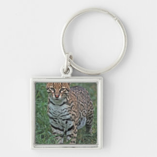 OCELOT Leopardus pardalis) CENTRAL AMERICA Silver-Colored Square Keychain