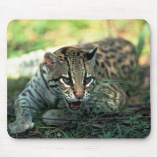 Ocelot lying down mouse pad