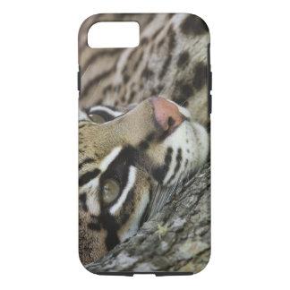 Ocelot, pardalis del Felis, cautivo, reclinación Funda iPhone 7