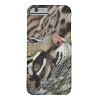 Ocelot, pardalis del Felis, cautivo, reclinación Funda Para iPhone 6 Barely There