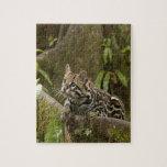 Ocelot Puzzles Con Fotos