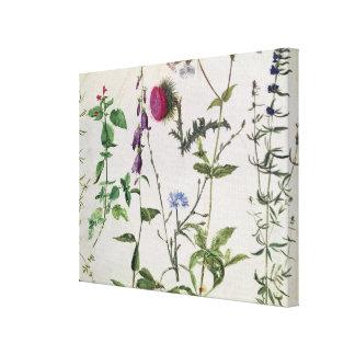 Ocho estudios de flores salvajes lona estirada galerías