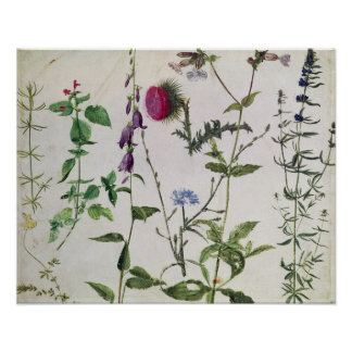 Ocho estudios de flores salvajes impresiones